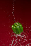 Green Pepper on Red Background Stock Photography