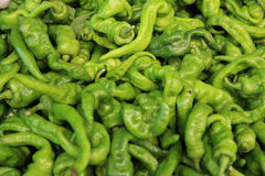 Green pepper selling on vegetable market Royalty Free Stock Image