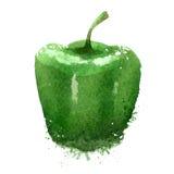 Green pepper vector logo design template Stock Images
