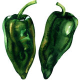 Green pepper, whole vegetable, two isolated objects, watercolor illustration on white Royalty Free Stock Image