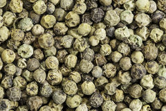 Green peppercorns Stock Photos