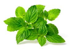 Fresh peppermint isolated on the white background. Green peppermint isolated on the white background Stock Photography