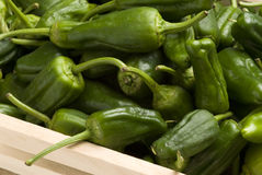Green peppers. Royalty Free Stock Photo