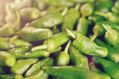 Green peppers background - texture of green pepper, chili Stock Image