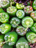Green Peppers esposed Royalty Free Stock Photography