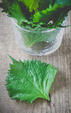 Green perilla Royalty Free Stock Photography