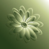 Green petals. A flower with green petals Royalty Free Stock Photo