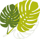 Green philodendron leaves vector illustration