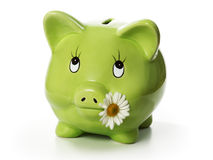 Green Piggy Bank. With daisy flower in mouth Stock Images