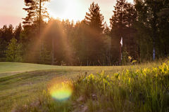 Green with pin flag at a golf course in Nordic forest landscape Stock Photos