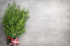 Green pine branch. Christmas decor background. Stock Images