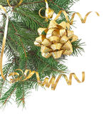 Green pine branch with gold bow Royalty Free Stock Image