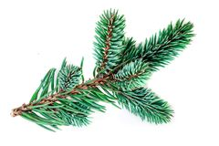 Green pine branch isolated on white background. Fir tree branch. Close up stock image