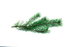 Green pine branch. Green pine branch on isolated white backgroung Royalty Free Stock Images