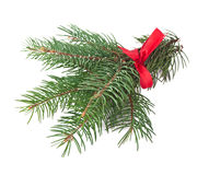 Green pine branch with red bow Royalty Free Stock Photos