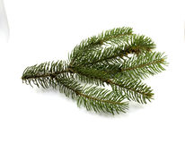 Green pine  branch on a white background.  Royalty Free Stock Photo