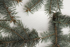 Green pine branch. On white background, copy space Royalty Free Stock Images