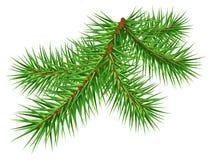 Green pine branch on white background. Green pine branch isolated on white background. Vector nnature illustration Stock Photo