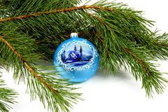 Green pine branches and blue sphere close up Royalty Free Stock Photography