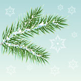 Green Pine branches in the snow Royalty Free Stock Photo