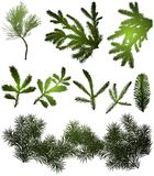 Set green pine branches isolated Stock Image
