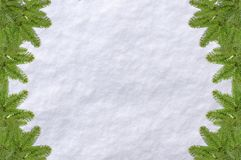 Green pine christmas background tree and snow surface white. Background on a bright cold morning day Stock Images