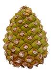 Green pine cone Stock Photo