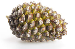 Green pine cone on white stock images