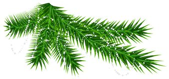 Green pine fir branch and rare snow snowflake. Christmas vector illustration isolated on white Royalty Free Stock Photo