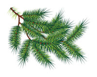 Green pine fir-tree branch, isolated on white. Vector. Green pine fir-tree branch, isolated on white backgroung. Vector illustration Stock Photos