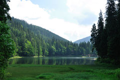Green pine forest above smooth surface of lake Synevyr Royalty Free Stock Photography