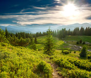 Green pine forest in mountains at sunset sky background Stock Photo
