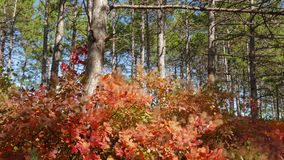 Green pine forests and red deciduous trees
