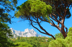 Green pine and high rocky mountains Royalty Free Stock Photo