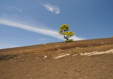 Green pine tree. On a dark volcanic ground Royalty Free Stock Image