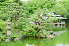 Green pine tree, backyard and traditional Japanese house Stock Images