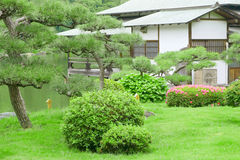Green pine tree, backyard and traditional Japanese house Stock Photos