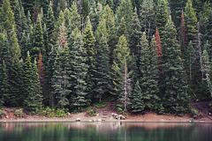 Green Pine Tree Beside Body of Water during Daytime Royalty Free Stock Photo