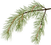 Green pine tree branch isolated illustration Stock Image
