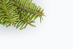 Green pine tree branch on white. Pine tree branch on white background with copy space Stock Photography