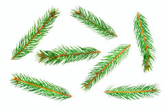 Green pine tree branches Royalty Free Stock Photos