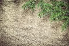 Green pine tree branches on bagging background Stock Photography