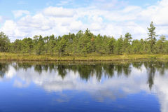 Green pine tree forest behind pond in marsh Stock Photos