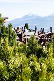 Green pine tree in the high Tatra mountains in Zakopane, Poland. Royalty Free Stock Images