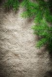 Green pine tree twigs on bagging background Royalty Free Stock Photography