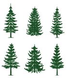 Green pine trees collection. Collection of 6 green pine trees. Isolated white background. EPS file available Royalty Free Stock Image
