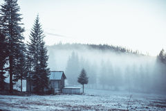 Green Pine Trees Beside Gray House Royalty Free Stock Photography