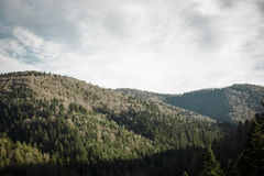 Green pine trees and hills landscape in Poland. Pine trees forrest and hills, landscape in Poland Royalty Free Stock Images