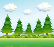 Green pine trees Stock Images