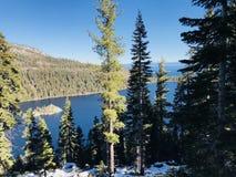 Green Pine Trees and Lake Royalty Free Stock Photos